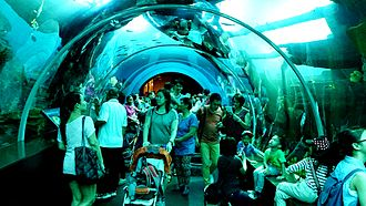 Marine Life Park - Walking in the SEA Aquarium
