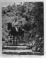 Saba. Brigadier Halley en gezaghebber X. Krugers gaan te paard over een bergweg, Bestanddeelnr 935-1262.jpg