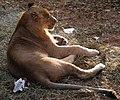 Saint Louis Zoo 032.jpg