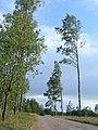 Saliena Parish, Latvia - panoramio - alinco fan.jpg