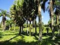 San Juan Botanical Garden - DSC06990.JPG