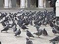 San Marco, 30100 Venice, Italy - panoramio (154).jpg