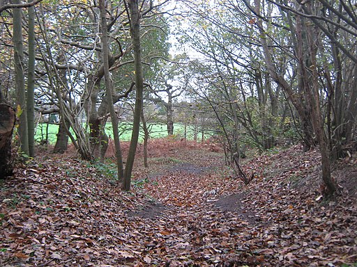 Saxon Shore Way in Heane Wood - geograph.org.uk - 2161367
