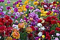 Say it with Flowers-002and (3936054877).jpg