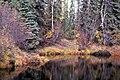 Scenic View of Tetlin National Wildlife Refuge (4730703633).jpg