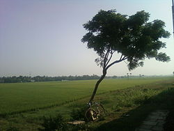 View of paddy fields near Kovvur from train