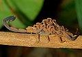 Scorpion Fluorescence.jpg