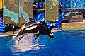 SeaWorld San Diego9.jpg