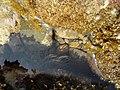 Sea - Mare (17158629992).jpg
