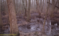 Seasonally Flooded Swamp in Maryland (7106806053).png