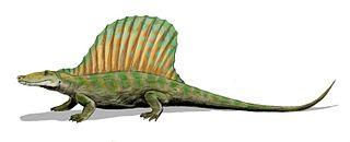 <i>Secodontosaurus</i> genus of synapsid