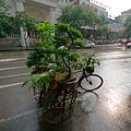 Selling plants on a tricycle.jpg