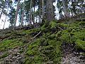 Selva Negra. Baden-Wurtemberg (Alemania). (27063581494).jpg