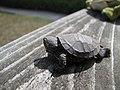 Seney National Wildlife Refuge (6092848248).jpg