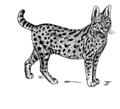 Serval (PSF).png