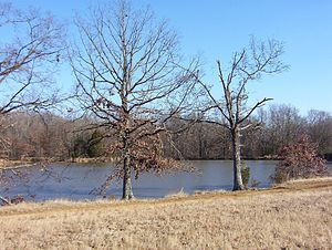 Shelby County, Tennessee - Scenic view in Shelby Farms park