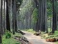 Shibpur botgardens.jpg
