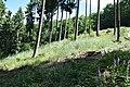 Siebengemeindewald (16) Lichtung mit Roten Fingerhut.jpg