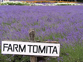 Sign of Farm Tomita.jpg
