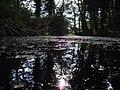 Silverburn Park Pond - panoramio.jpg