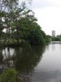 Singapore Botanic Gardens, Eco-lake 2, Sep 06.JPG