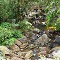 Sinharaja Rain Forest - panoramio (8).jpg