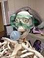 Skele-Bulb.jpg