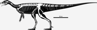 Pampadromaeus - Skeletal reconstruction showing known remains