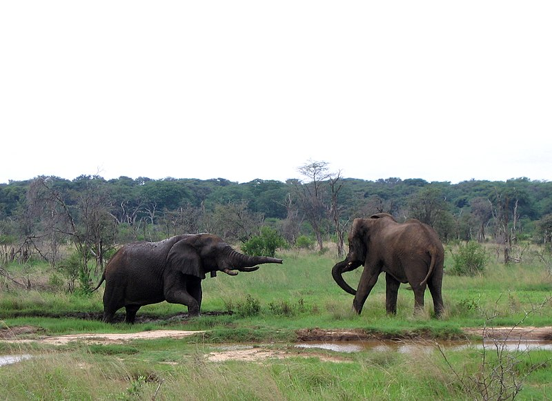 Elephants, Hwange National Park. From 10 of the Best Experiences on a Safari in Africa