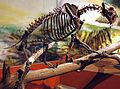 Smilodon californicus saber-toothed tiger (La Brea Asphalt, Upper Pleistocene; Rancho La Brea tar pits, Los Angeles, southern California, USA) 2 (15256732527).jpg
