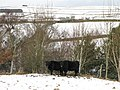 Snowy pastures above Shield Burn - geograph.org.uk - 675684.jpg