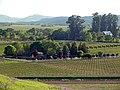 Solano-hillside 004.jpg