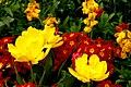Spring flowers in London (6967710212).jpg