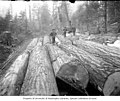 Stack of felled logs next to railroad tracks with donkey engine in background, ca 1903 (INDOCC 639).jpg