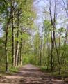 Stadtwald Mutterstadt Waldweg.JPG