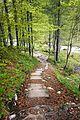 Stara Fužina - trail.jpg