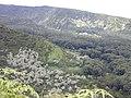 Starr-010908-0039-Aleurites moluccana-habitat-Wailua iki-Maui (24246553350).jpg