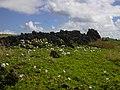 Starr-050224-0119-Ipomoea cairica-flowering habit-Kaohikaipu-Oahu (24737096585).jpg