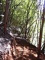 Starr 041010-0015 Psidium cattleianum.jpg