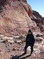 Starr 071226-0771 Erodium cicutarium.jpg