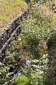 Steinbach in Steinbach am Wald (MGK18601).jpg
