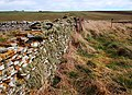 Stone dyke following the coastline - geograph.org.uk - 1222282.jpg