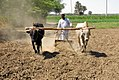 Sudanese man preparing land by traditional way.jpg