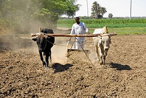 Economy of Sudan - Agriculture