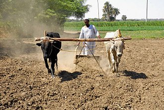 Economy of Sudan - Agriculture