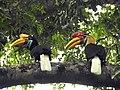Sulawesi trsr DSCN0307 v1.JPG