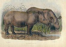Dessin représentant deux rhinocéros s'abreuvant à un point d'eau.