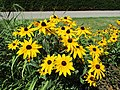 Summer flowers (28192924653).jpg