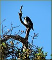 Sunning Bird, Oakmont 3-31-13 (8619944288).jpg