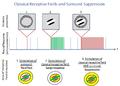 Surround suppression, classical receptive fields, non-classical receptive fields.png
